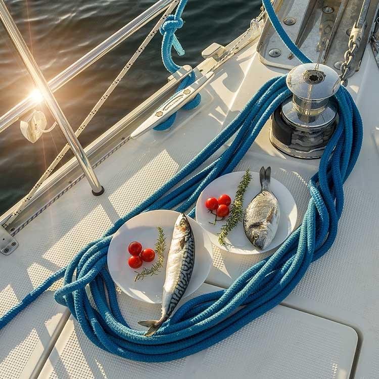 Poslovna Fotografija Delfin Charter   B